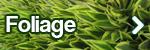 foliage_new1