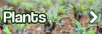 plants_new